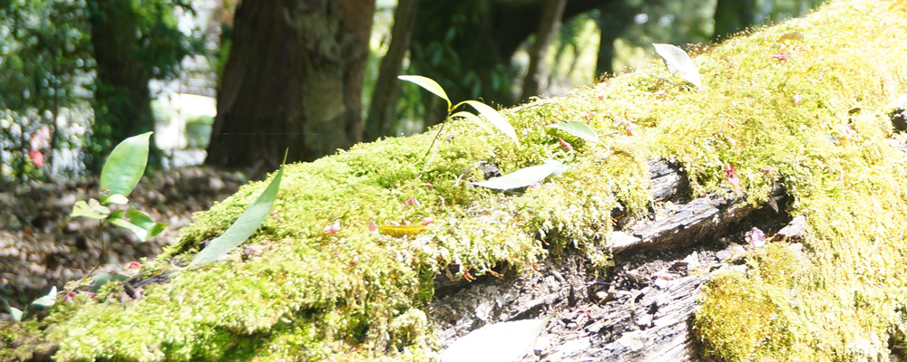 近江神宮の森